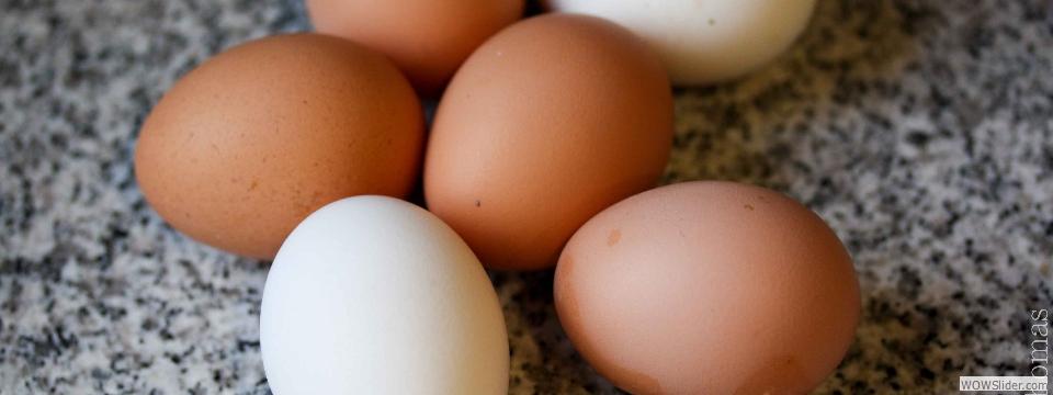 eggs-ellent